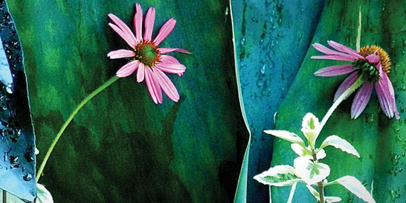 <em>Edit Article</em> Mindfulness for the Wallflower