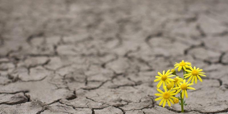 flower growing through rocky osil