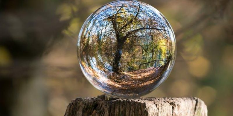 reflection of tree in a glass orb