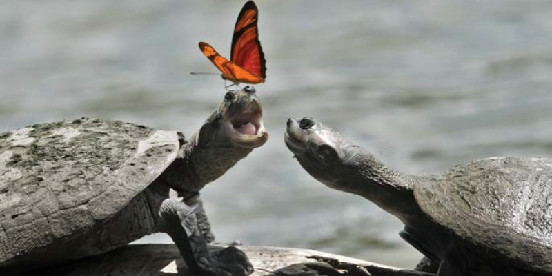 A butterfly lands on a turtle