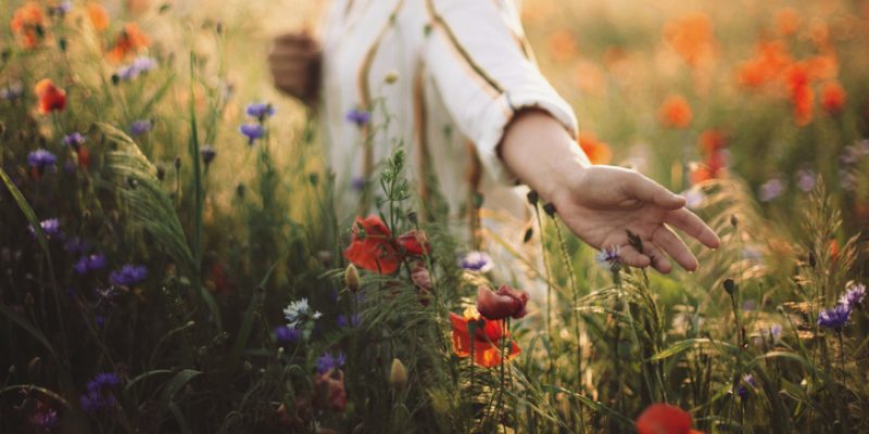 Woman gathering poppies and wildflowers in a summer meadow, having overcome cancer with alternative treatments.