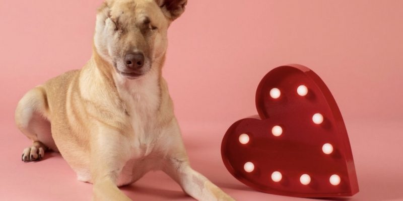 Maggie the Wunderdog, a dog who teaches lessons on forgiveness and love