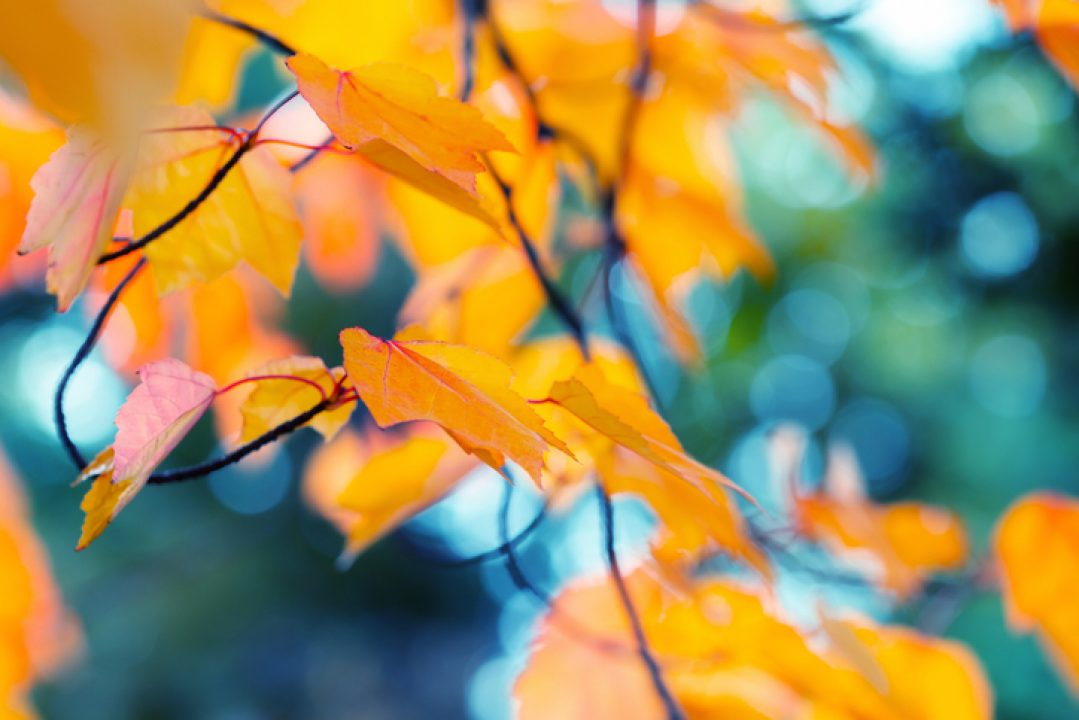 Leaves on a tree illustrate that we are not indispensable