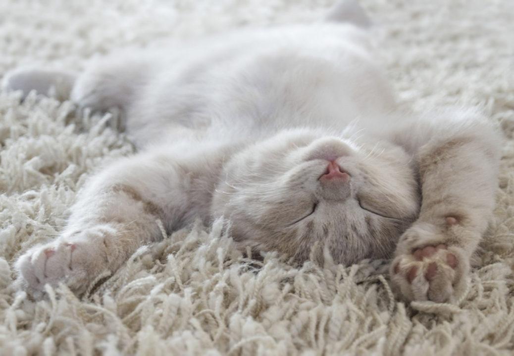 Cat asleep on a rug