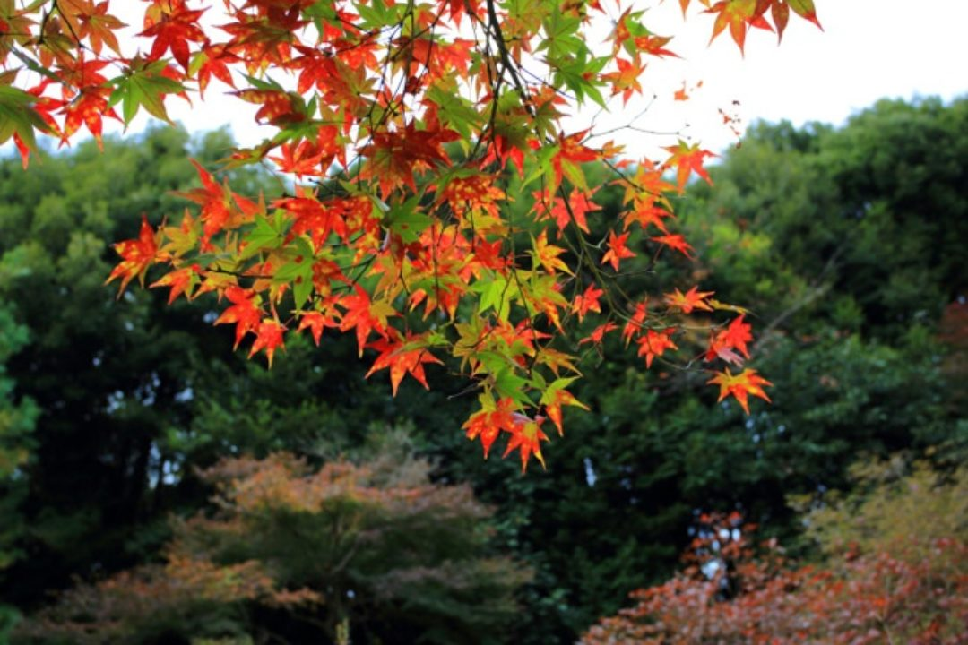 Leaves changing color in fall