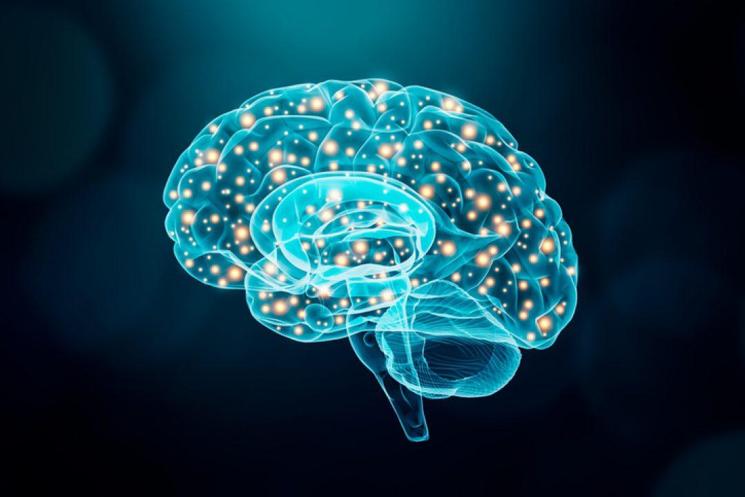 A brain illustrates how EMDR can rewrite neural pathways