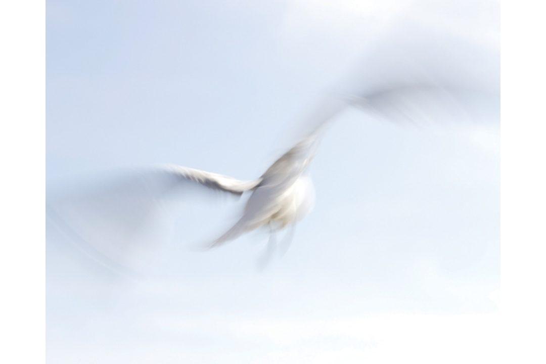 illustration of bird flying