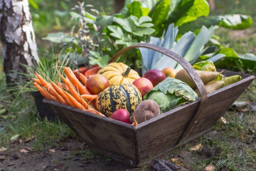 Winter vegetables in wood basket