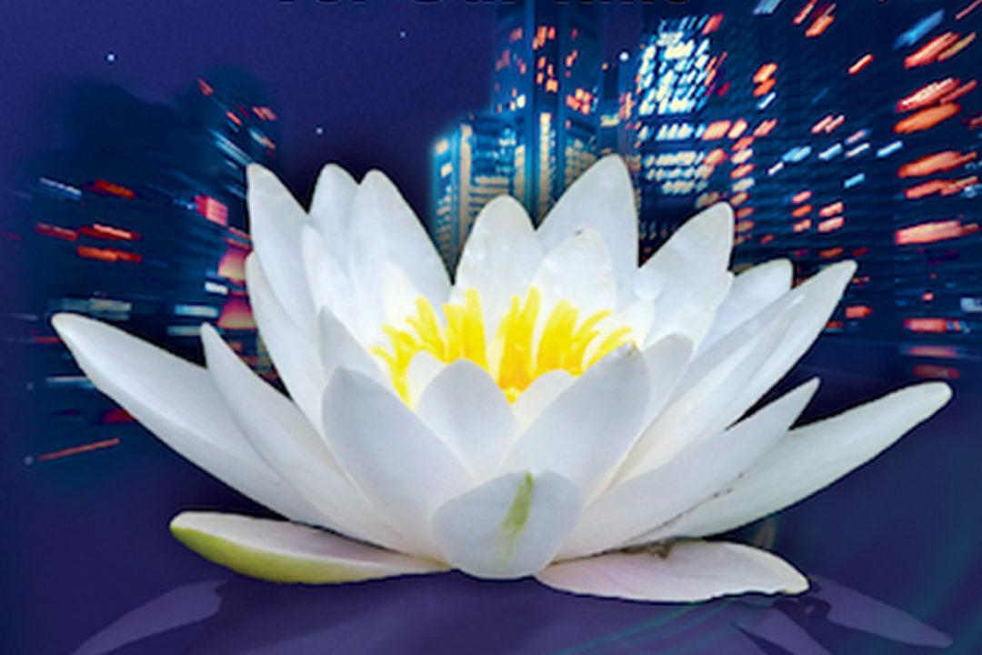 A lotus flower in bloom