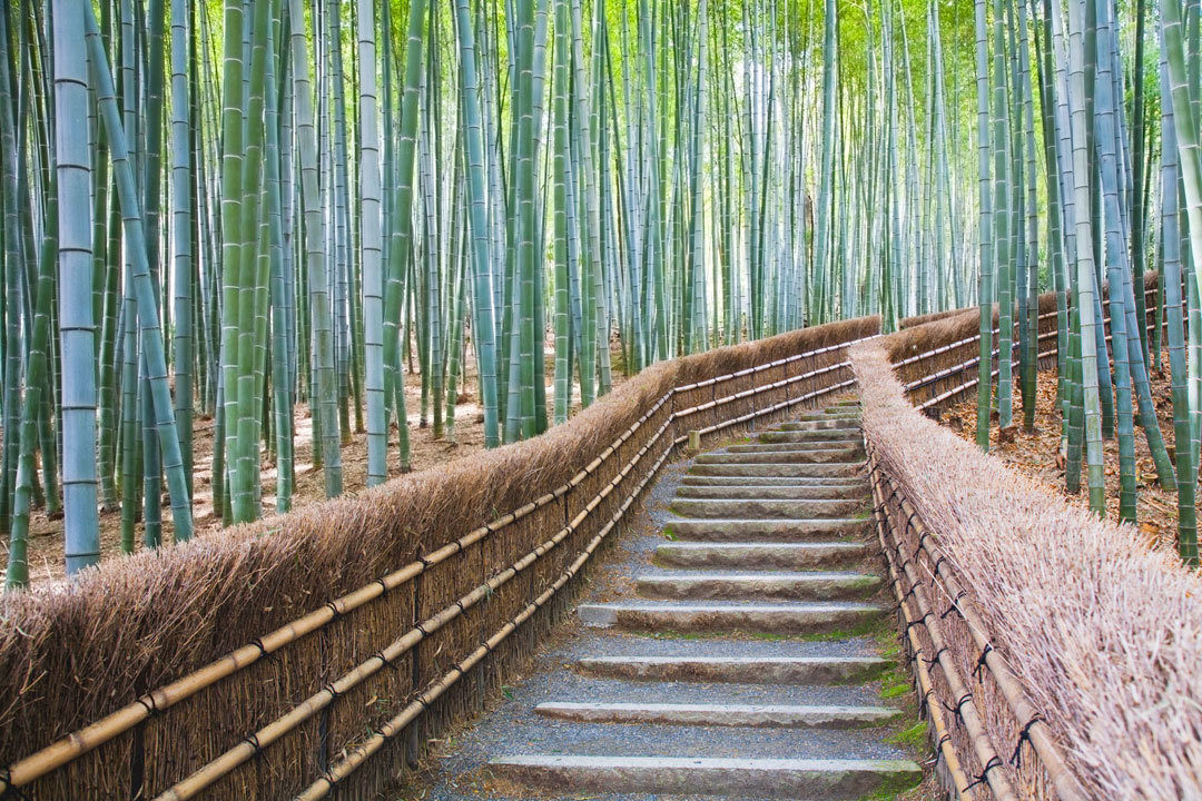 Path leading into bamboo forest