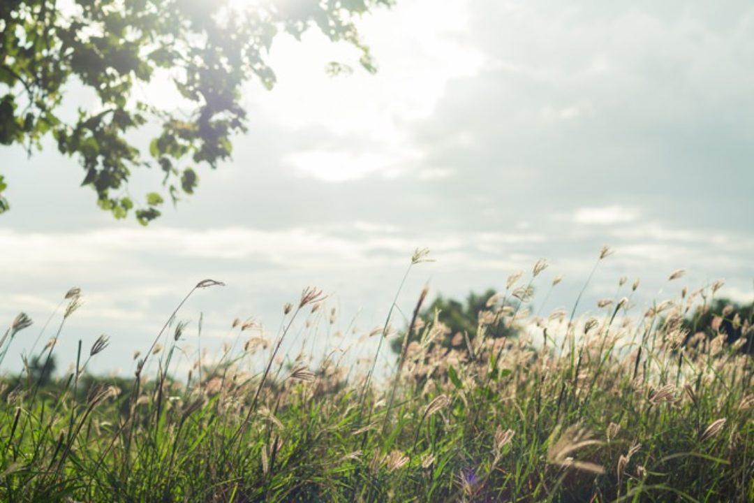 Field in morning light