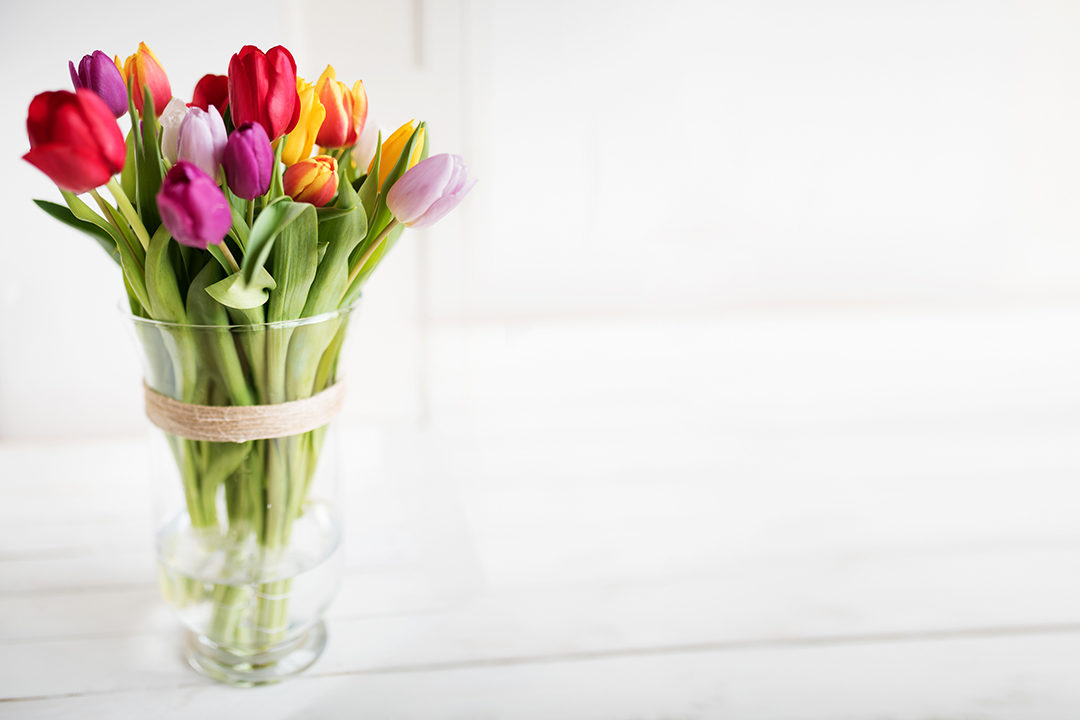 Colorful tulips in vase