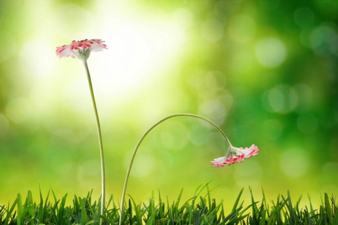 Two flowers in the grass