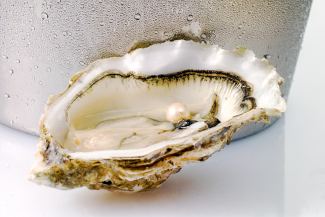 Pink pearl in oyster shell