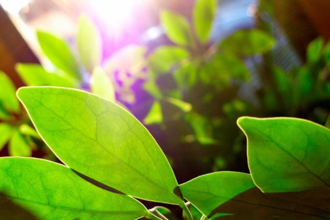 Green plants in sunshine