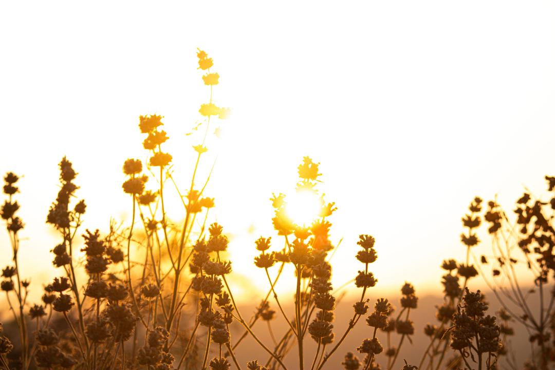 morning in a field