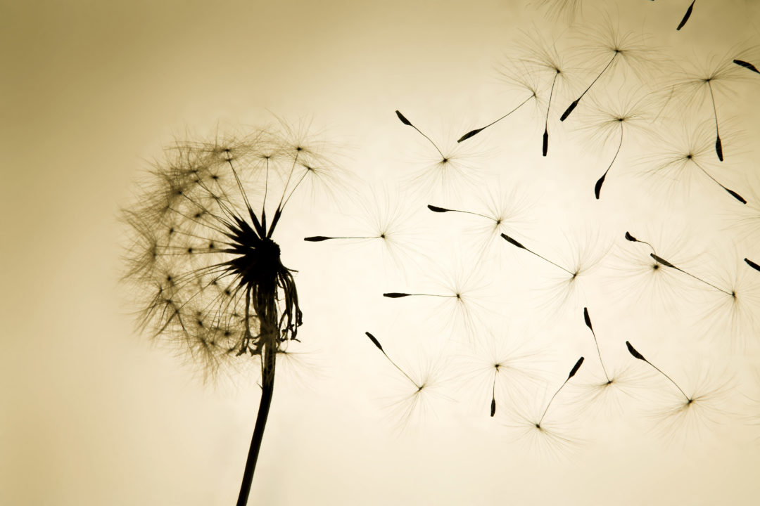 Seeds scattering in the wind