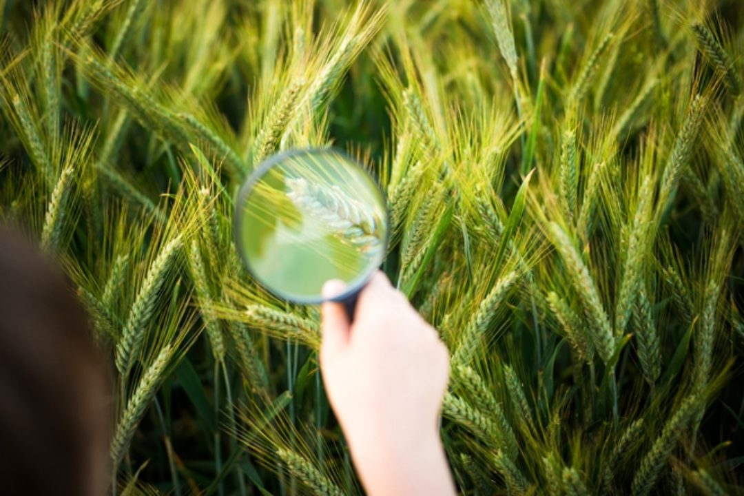 Child looking through magnifying glass at grass