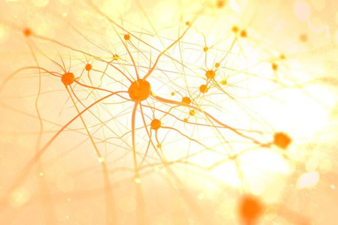 white and yellow image of brain neurons