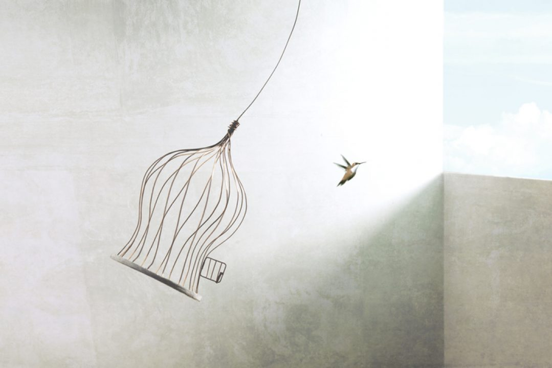 bird flying from cage for freedom the buddhist way