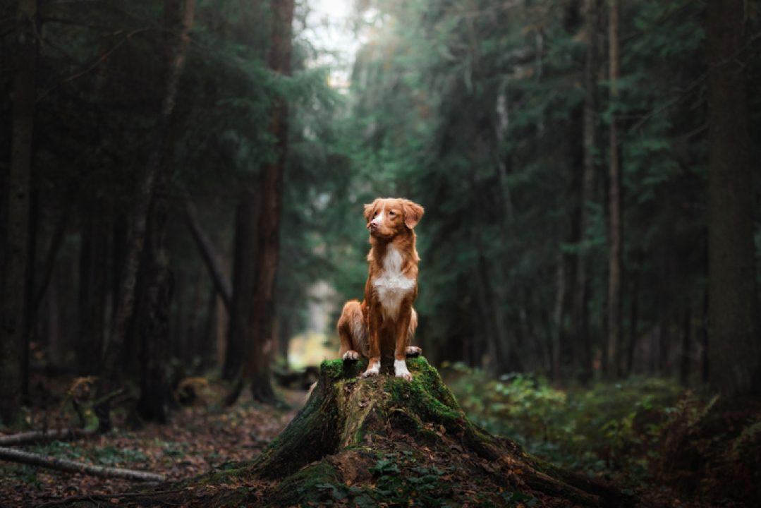 dog in the woods walking the spiritual divine fido