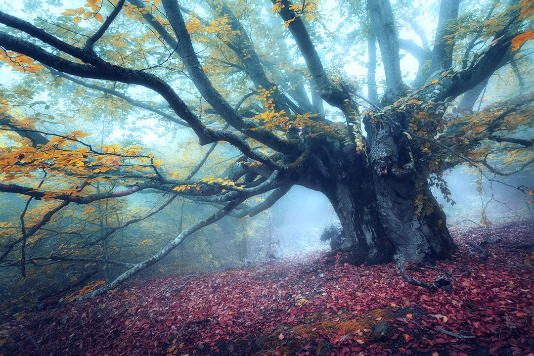 Beautiful tree in forest