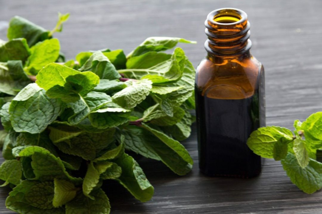 Essential oil bottle and mint
