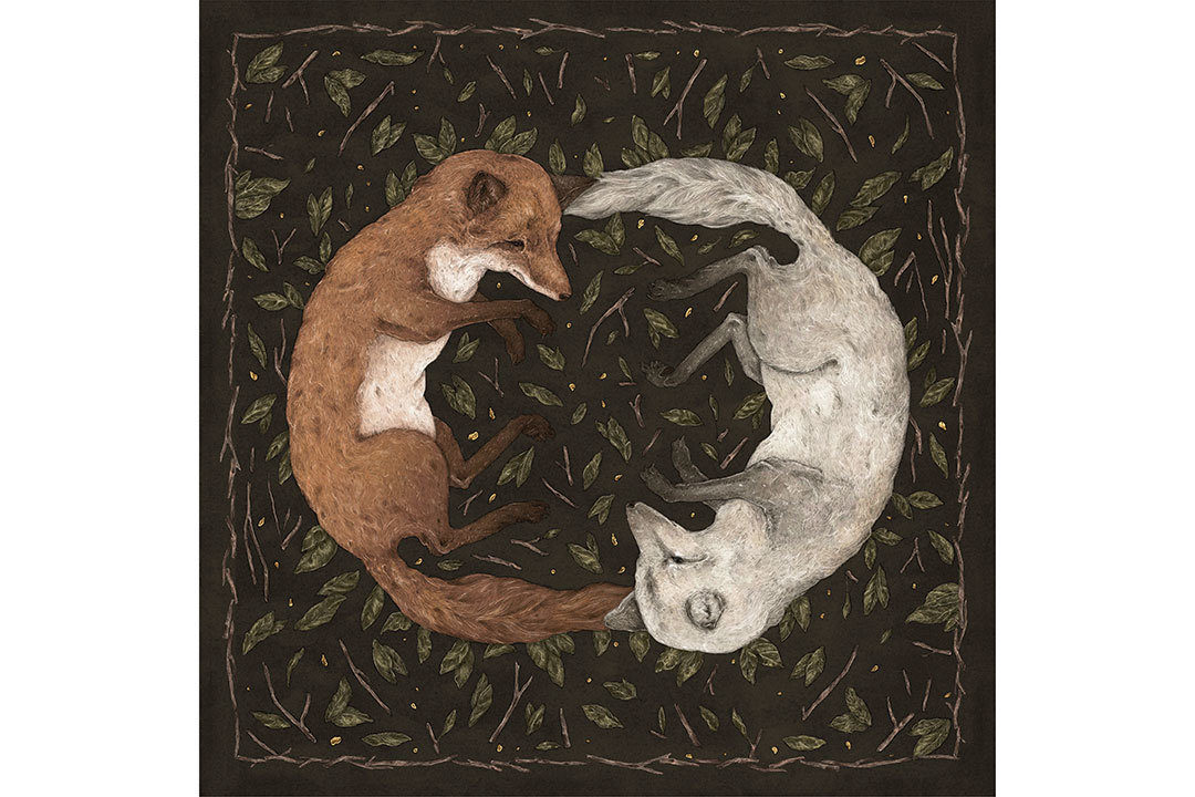 Illustration of two foxes