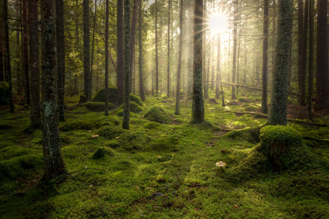 Practicing nonviolence on forest floor among fungi