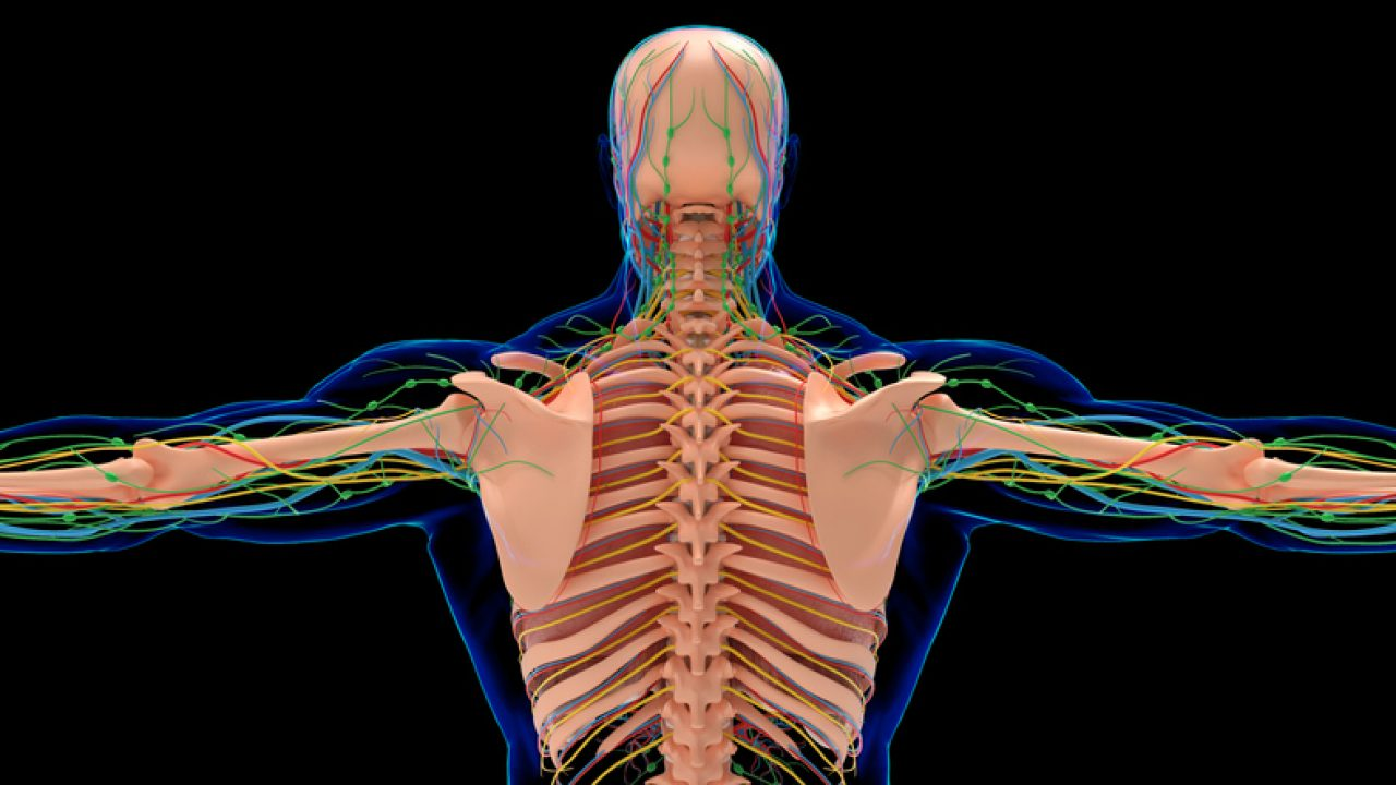 human skeleton showing back how to ease upper back pain and the emotional meaning behind it.