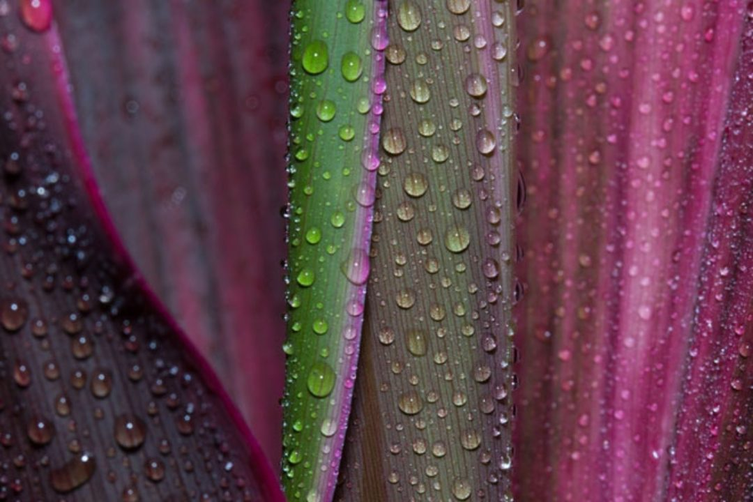 closeup of water on plant