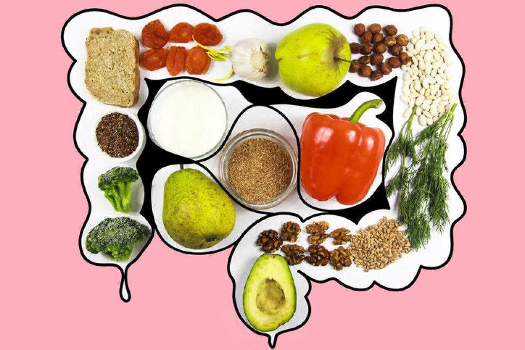 Illustration diagram intestines full of food before intermittent fasting