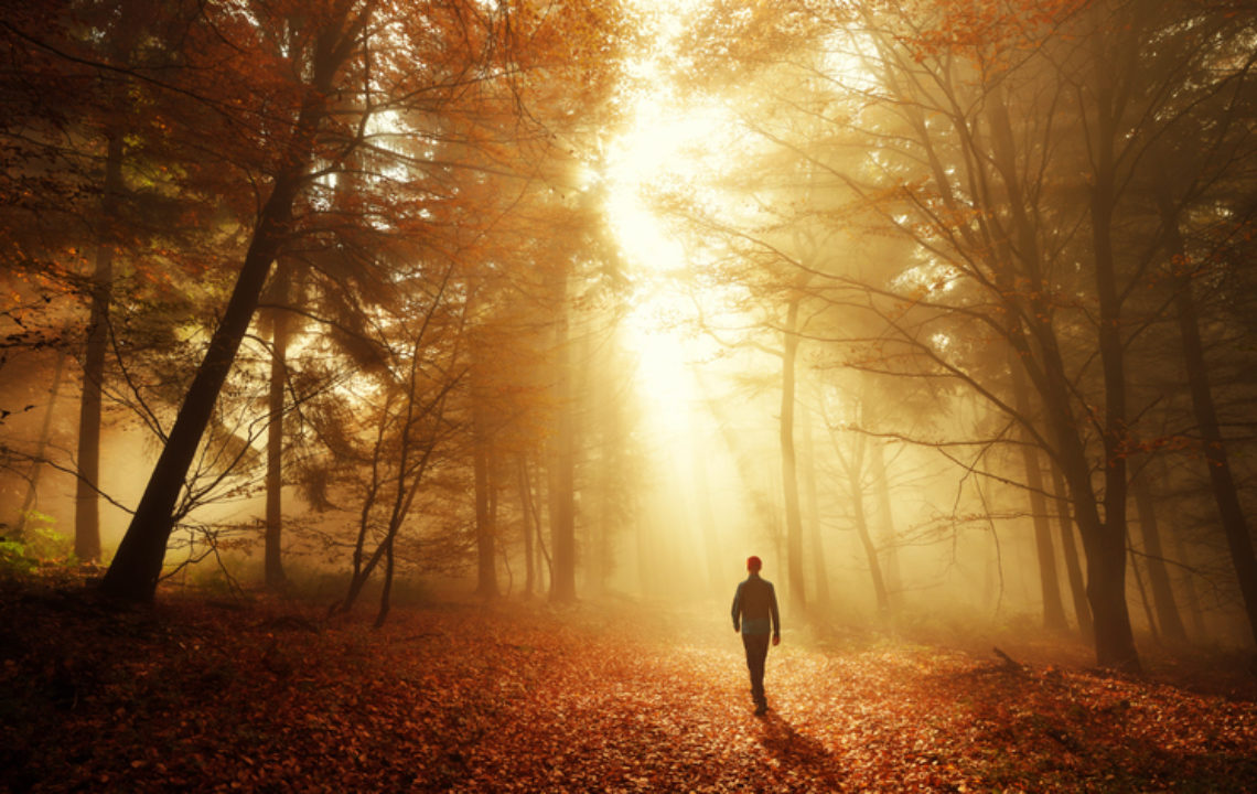 Male hiker walking into the bright gold rays of light in the autumn forest, landscape shot with dramatic lighting mood
