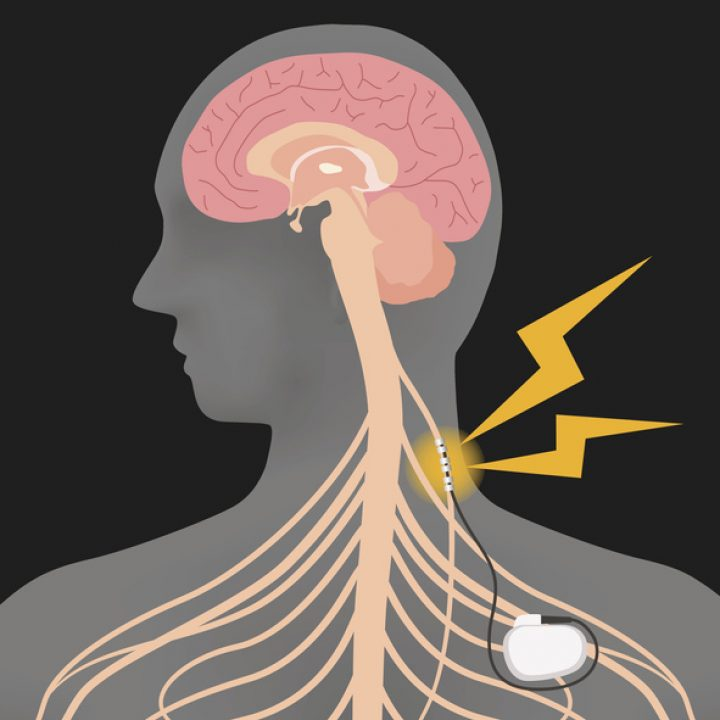 illustration of interior human body vagus nerve