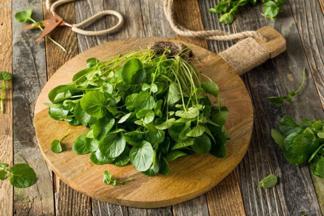 <em>Edit Article</em> Watercress-Parsley Soup