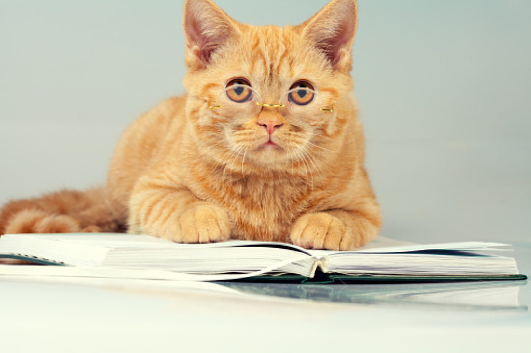 Wise cat with glasses lying on a book