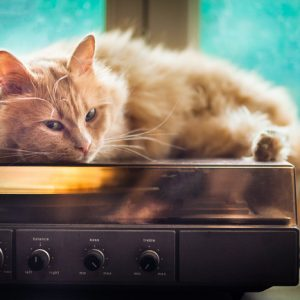 Orange long hair cat laying on a record player