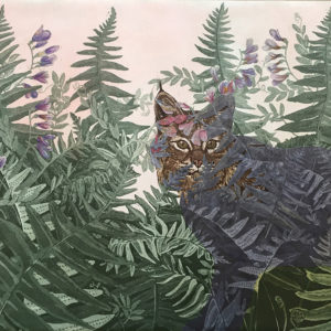 Bobcat in California Polypody and American Vetch Julia Lucey