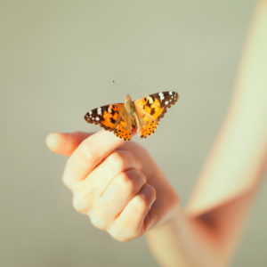 Butterfly resting on fingers