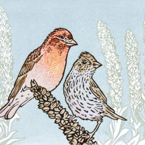 illustration of birds and plant