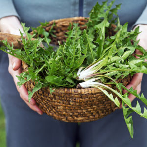 A basket of dandelion leaves