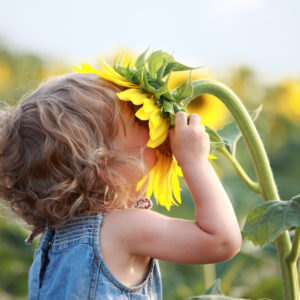 Child Smelling Sunflower