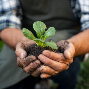 Farmer hands planting sprout in soil