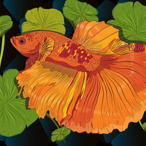 Polygon vector color drawing of betta or Siamese fighting fish illustration