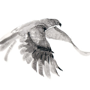 Illustration of falcon flying