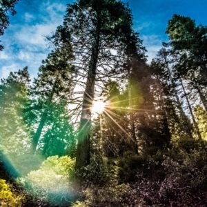 Sun flare image of trees in woods