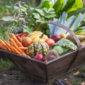 Winter vegetables in wood basket