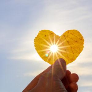 Sun shines through a heart-shaped leaf