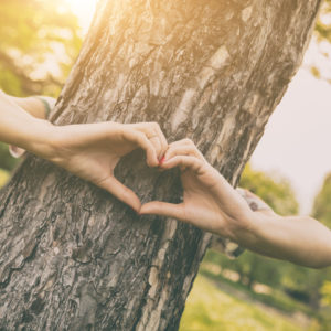 Hands embracing a tree