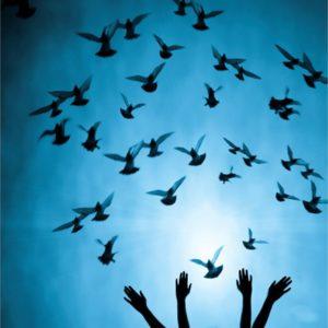 Hands releasing birds in blue light